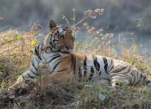 2 Nights 3 Days Kanha Wildlife Tour - Itinerary, Packages