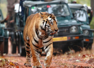 2 Nights 3 Days Ranthambore Tour Packages - Itinerary, Safari