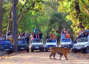 2 Nights 3 Days Tadoba Tour Packages from Nagpur - Safari, Booking