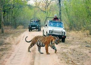 2 Nights 3 Days Ranthambore Tour from Jaipur