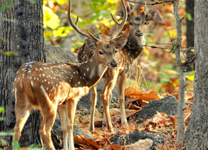 2 Nights 3 Days Pench Tour from Nagpur