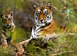 2 Nights 3 Days Jim Corbett Wildlife Tour