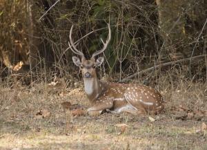 3 Nights 4 Days Bandhavgarh Wildlife Tour Packages