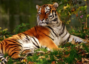 3 Nights 4 Days Kanha Wildlife Tour - Itinerary, Packages