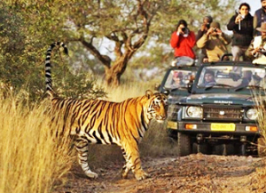 3 Nights 4 Days Ranthambore Agra Tour - Itinerary, Packages