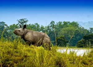 3 Nights 4 Days Kaziranga and Manas National Park Tour