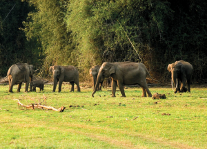 16 Days South India Wildlife Tour– Nagarhole Bandipur Eravikulam Periyar