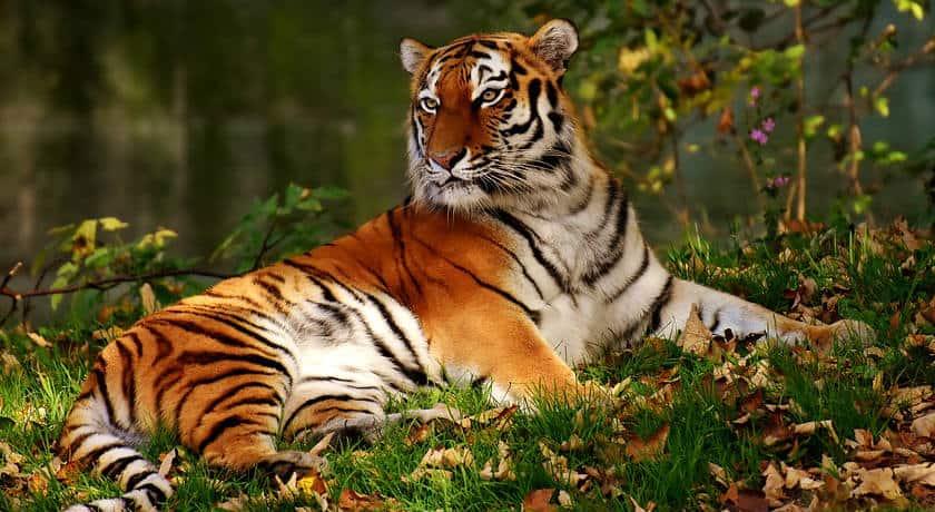 Bandhavgarh wildlife tour