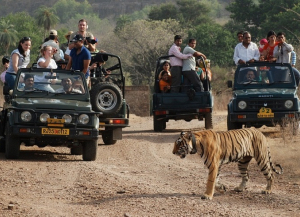 2 Nights 3 Days Ranthambore Tour from Delhi - Itinerary, Packages