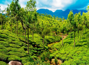 11 Nights 12 Days Kerala Family Tour Packages from Mumbai