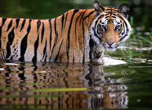 12 Night 13 Days Wildlife Photography Tours India