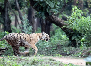 10 Days -Exclusive Nagarhole with Bandipur Tour