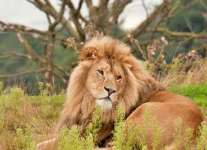 12 Days Gujarat Wildlife Tour - Gujarat Wildlife Tour from Mumbai