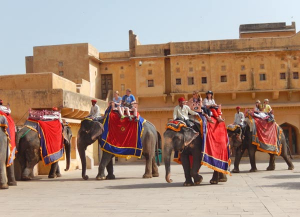 14 Nights 15 Days North India Culture and Wildlife Tours