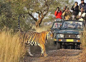 21 Nights 22 Days India Wildlife with Cultural Holiday Tour Packages