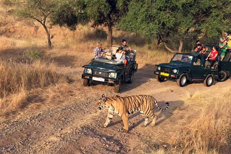 Jim corbett jeep safari