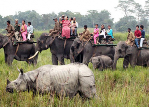 6 Nights 7 Days Assam North East India Wildlife Tour - Itinerary, Packages