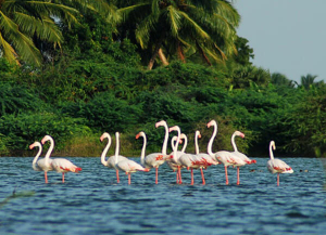 8 Days Kerala Cultural Heritage Tour with Wildlife, Hill Stations and Beaches