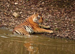 10 Days South India Wildlife and Culture Tour - Itinerary, Packages