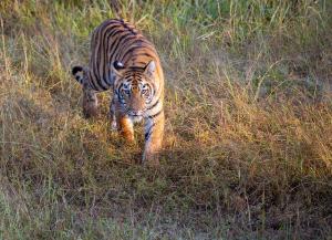 3 Nights 4 Days Tadoba National Park Tour from Mumbai
