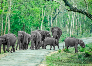 1 Night 2 Days Bandipur Tour from Bangalore with Windflower Tusker Trails