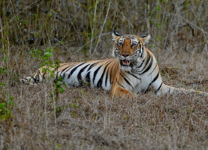 13 Nights Kerala Wildlife Tour Packages - Periyar Bandipur
