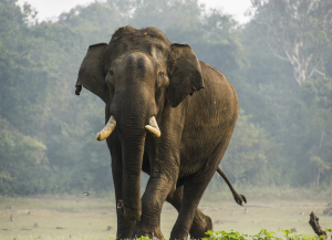 2 Days Nagarhole Weekend Tour Package from Mysore