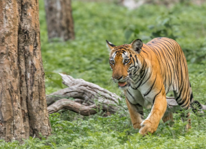2 Days Nagarhole Weekend Tour Package from Bangalore