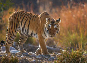 3 Nights 4 Days Jim Corbett and Nainital Tour Package from Ahmedabad