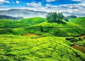 Best of Munnar Tour Package - 2 Night 3 Days Sightseeing