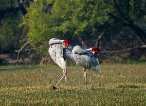 7 Nights 8 Days Golden Triangle Tour with Bharatpur, Ranthambore