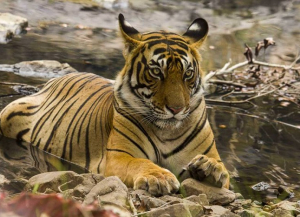 8 Days Golden Triangle Tour with Ranthambore - Itinerary, Package, Safari