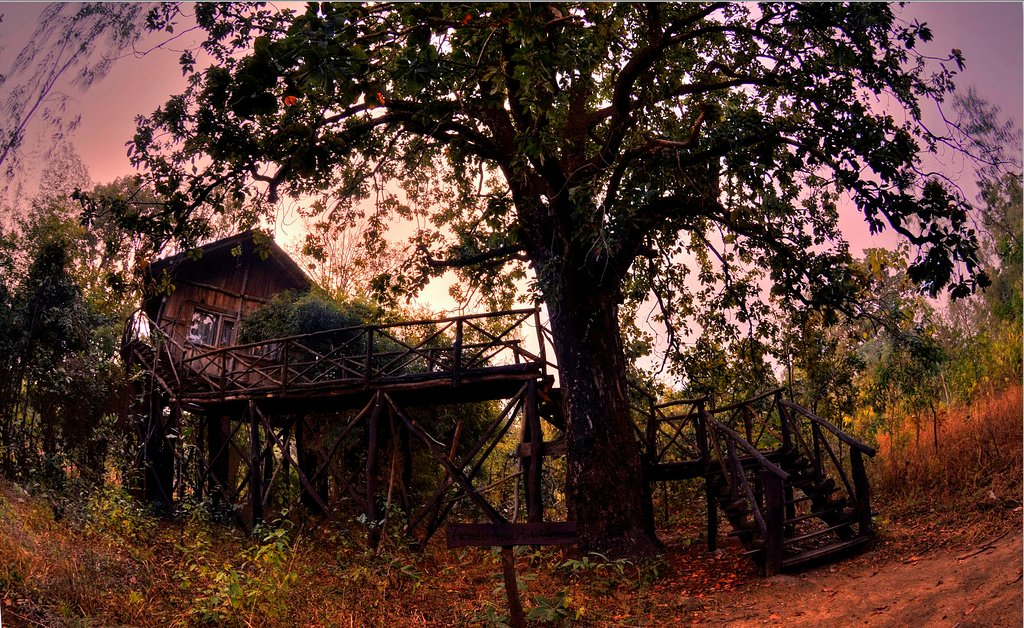 Tree house bndhavgarh
