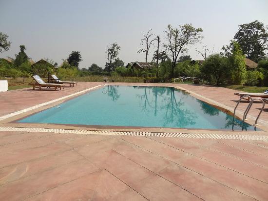 swimming pool tiger lagoon bandhavgarh