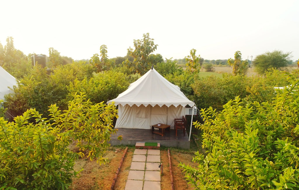 Tiger Inn Comfort Resort Luxury Tents