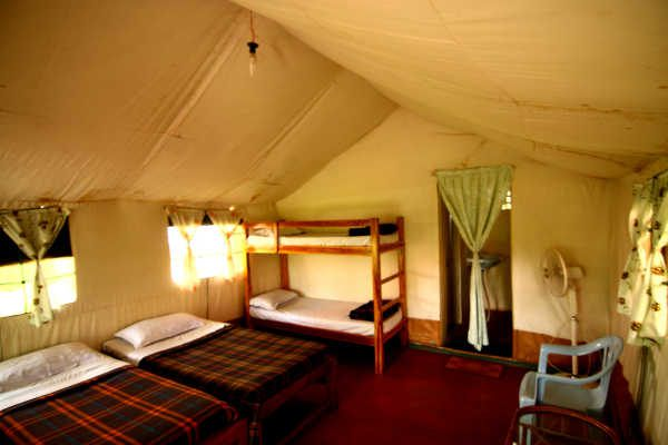 The Jungle inn tent