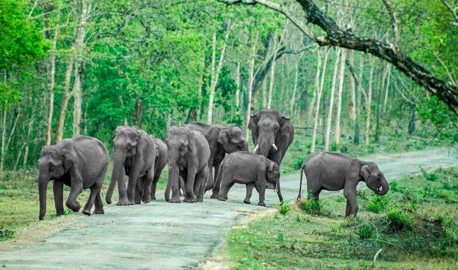 Thekkady elephant ride